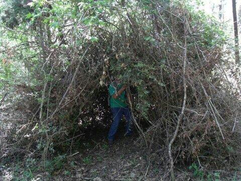 Sasquatch nest